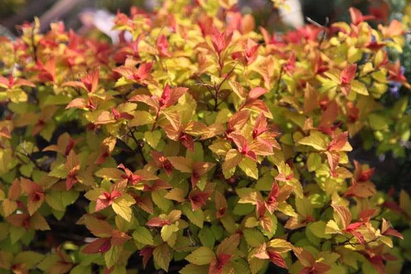 Plants That Display Beautiful Fall Colors