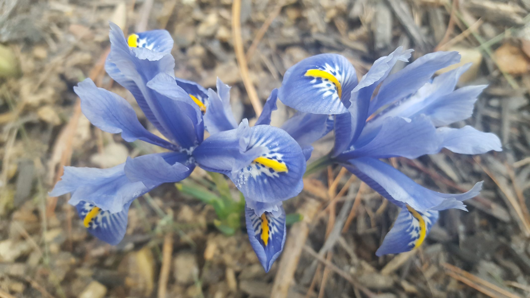 PLANT SPOTLIGHT: The Crocus
